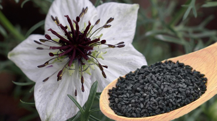 Crni kim - cvet i seme
