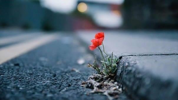 Cvet u betonu
